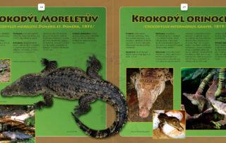 Atlas krokodýlů vnitřek